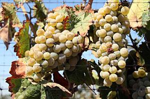 Churchill Winery