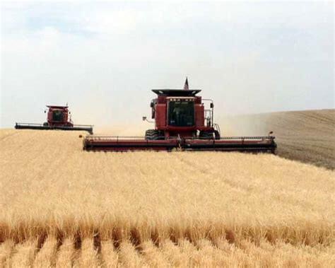 Barley Harvest Time